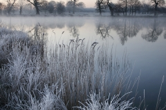 Cold Morning : Gunton Park