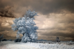 A tree and St Benets Infrared image