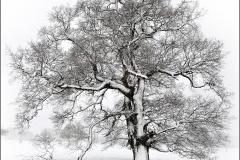 A Winters tree