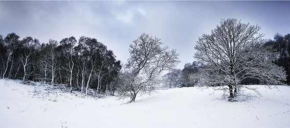 Photograph of snow covered woods Norfolk.
