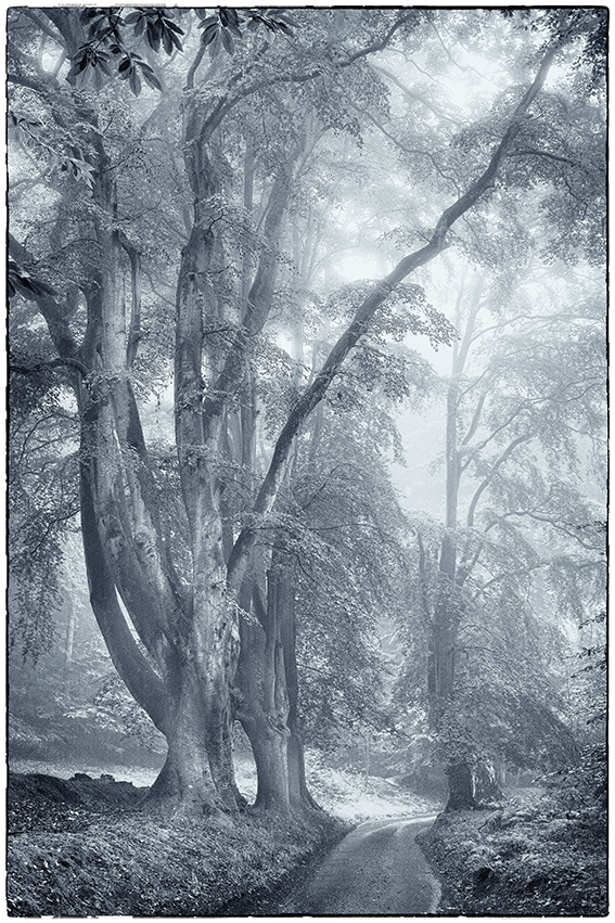 Art photographic print of trees in The Lion's mouth Cromer.
