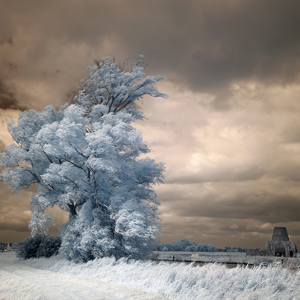 Infrared photograph of a tree and St Benets Norfolk.