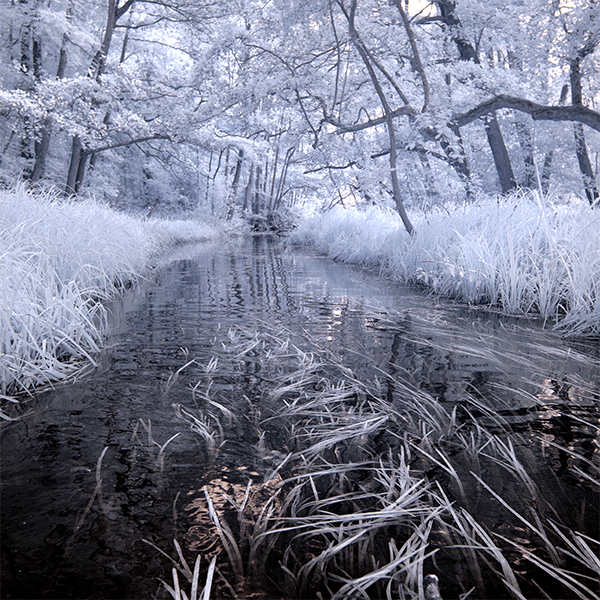 Infrared photograph of the River Ant.