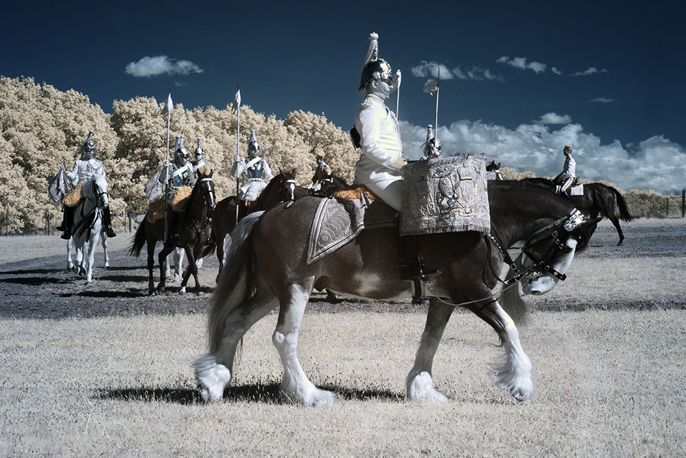 Infrared photograph of the Drum horse of the Household Cavalry.