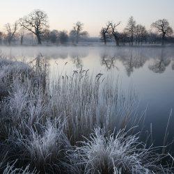 A photograph of a frosty morning in Gunton Park Norfolk.