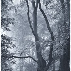 A photographic study of trees in The Lion's mouth Norfolk.