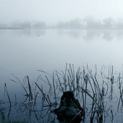 A photograph of reeds and a lake on a misty morning.