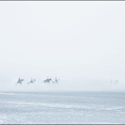 Horses appearing out of the mist on the beach near Hunstanton.