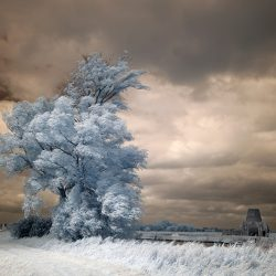 An infrared photograph of a tree and the ruins of St Benets Norfolk.