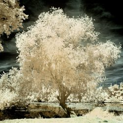 An infrared photograph of a trees on the river Somme France.