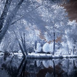Infrared photograph of trees on the banks of the Somme France.