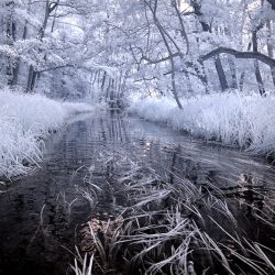 Infrared photograph of the river Ant in Norfolk.