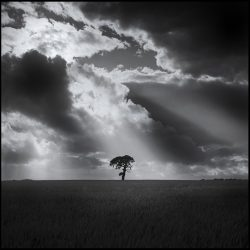 Black and white photograph of a tree against a dramatic storm sky.